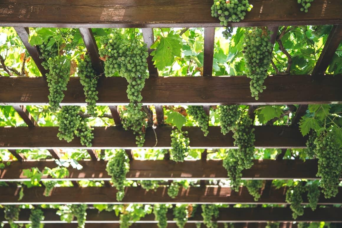 Vineyards in Italy. Travel tips