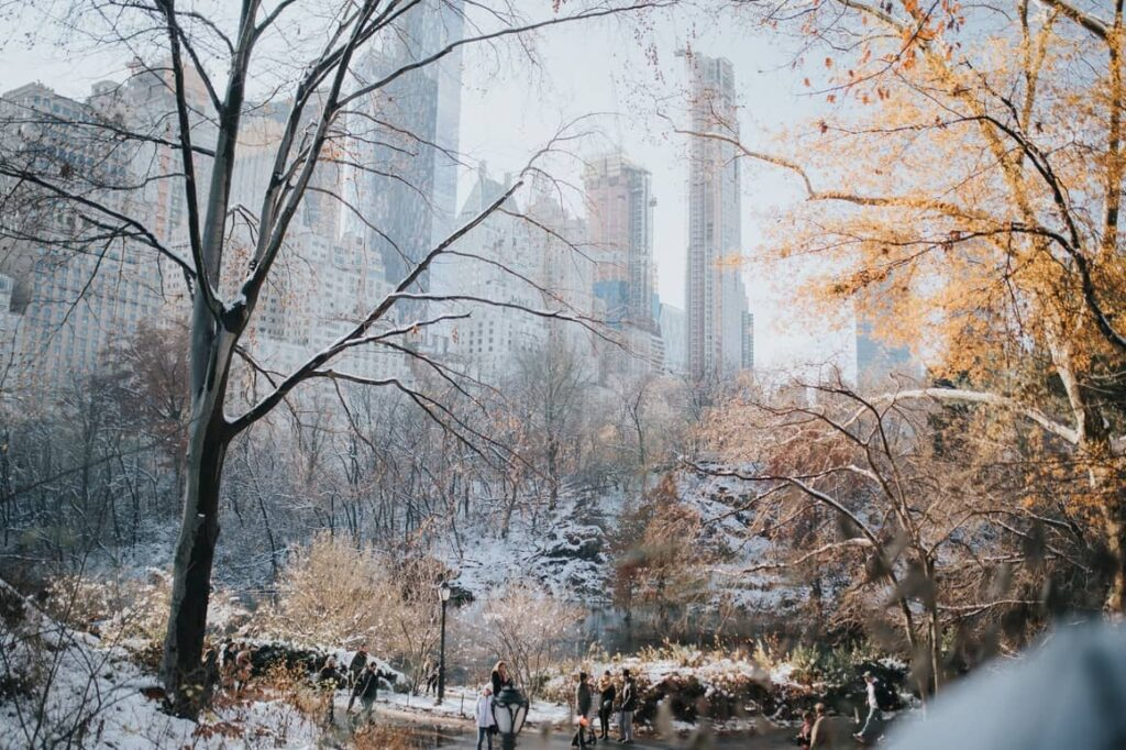 Central Park at Christmas time