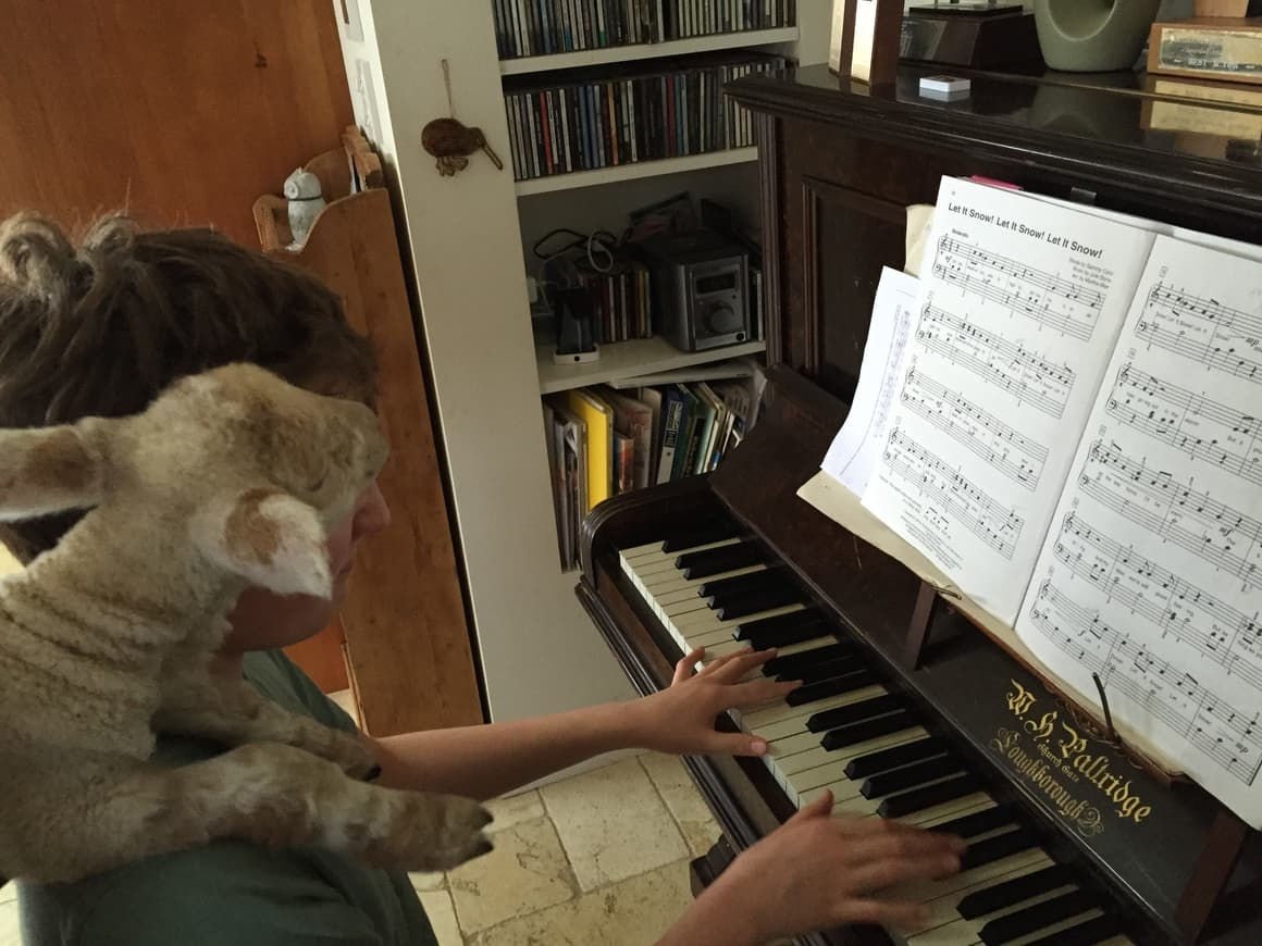 Boy playing piano with a lamb on his shoulder. Homeschooling