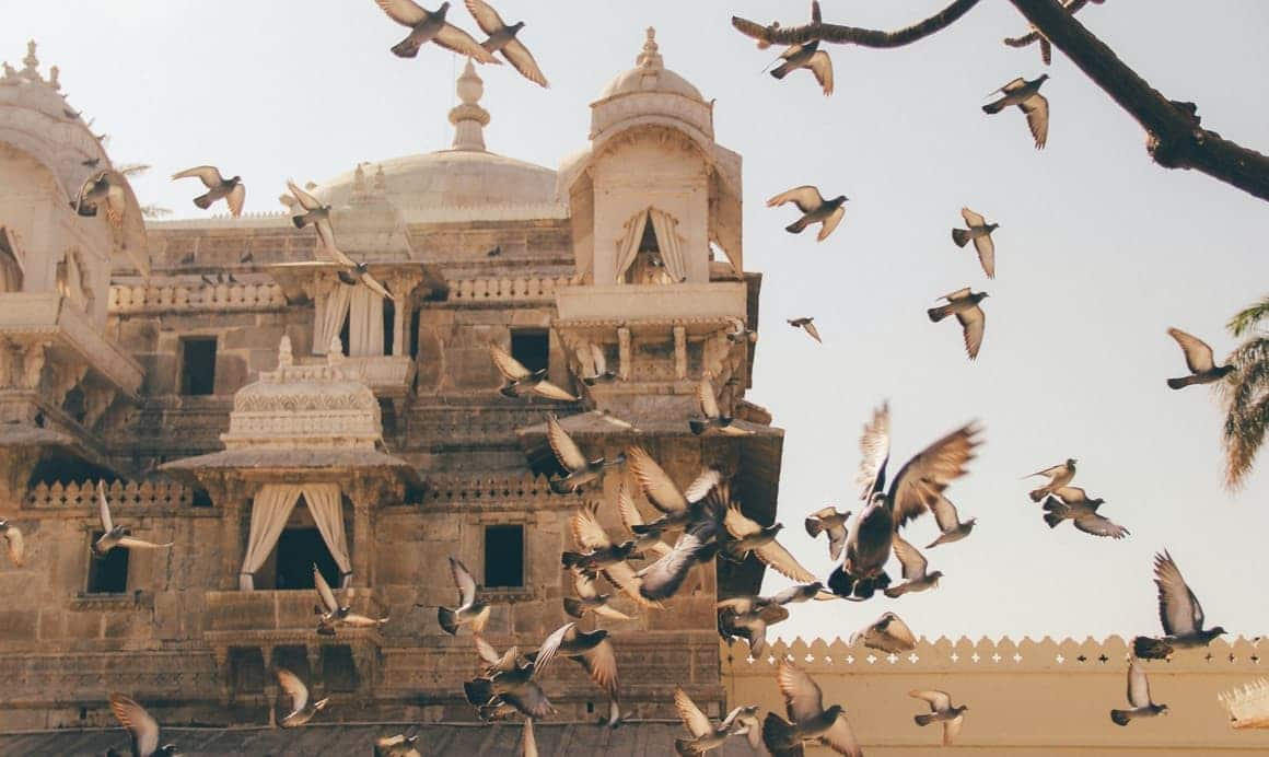 Birds flying from a royal residence. Udaipur, India. One of the most beautiful places on earth