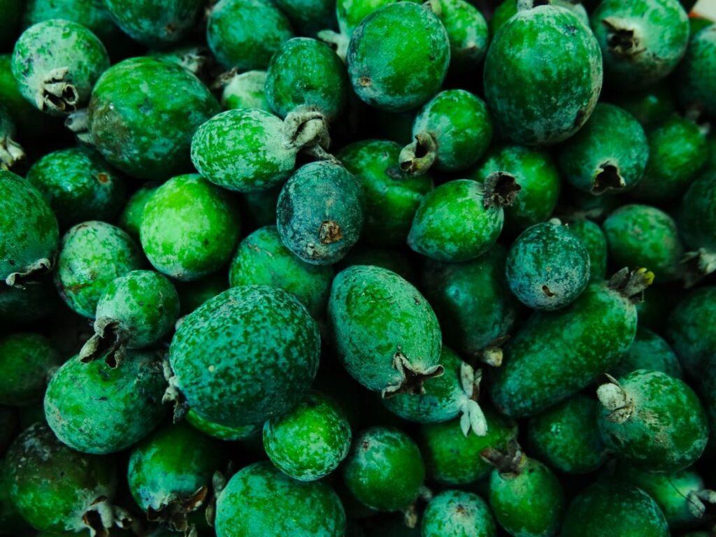 feijoa fruit. Food in New Zealand