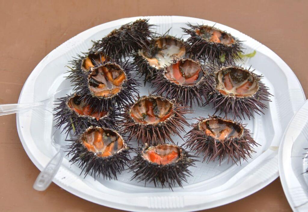 sea urchin, Kina a food of New Zealand