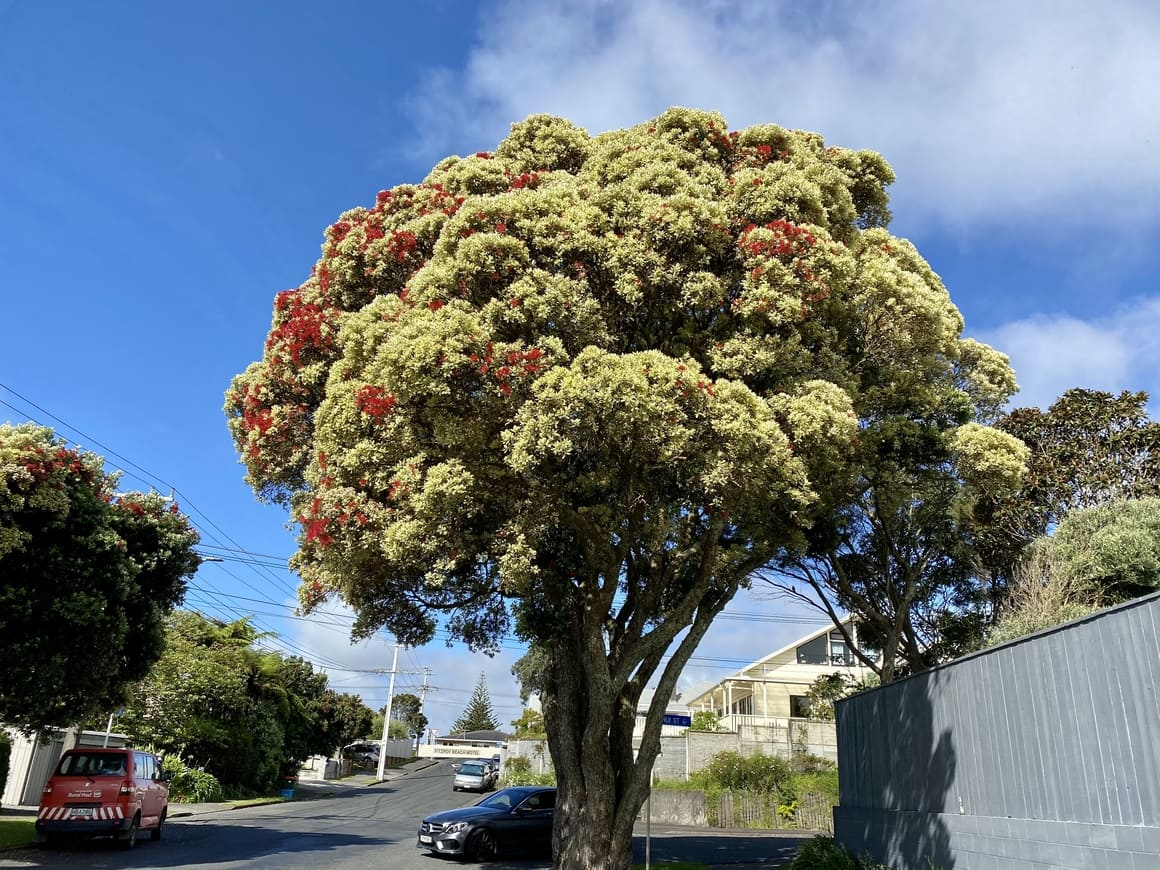Pahutakowa tree in New Zealand