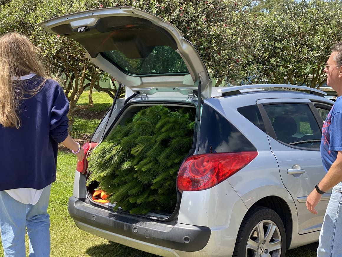 Christmas tree in the back of a car in  New Zealand