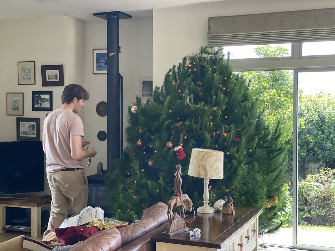 Boy trimming up a Christmas tree in  New Zealand